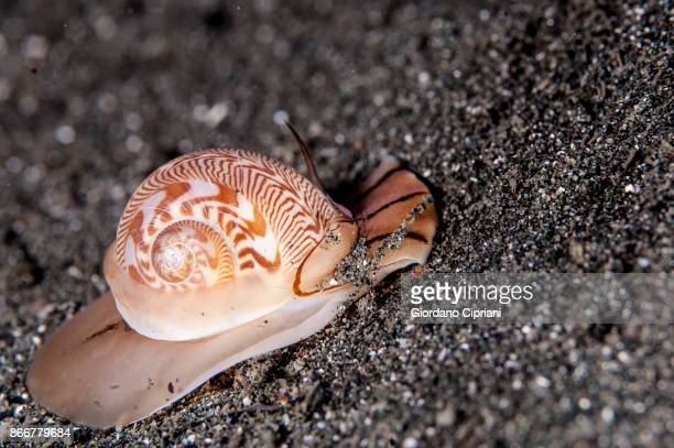 sea shell - invertebrate stock pictures, royalty-free photos & images