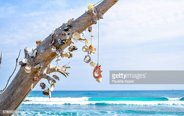 sea shells hanging from tree trunk - isla mujeres ストックフォトと画像