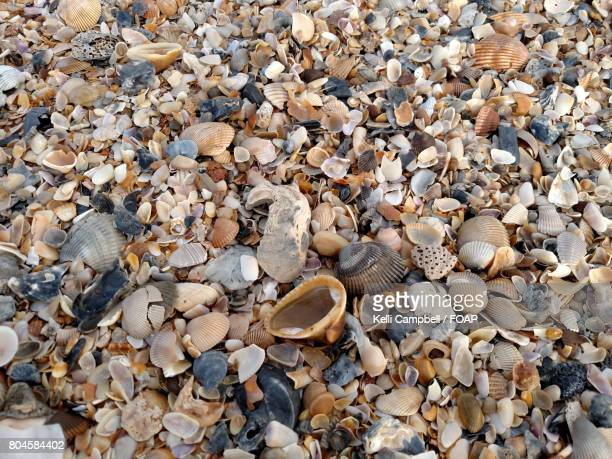 sea shells on beach - kelli campbell stock pictures, royalty-free photos & images