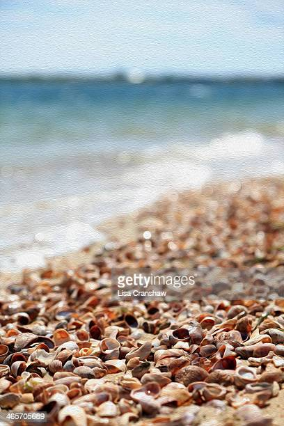 sea shells on nantucket - lisa cranshaw stock pictures, royalty-free photos & images