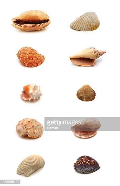 Sea shells - very big file