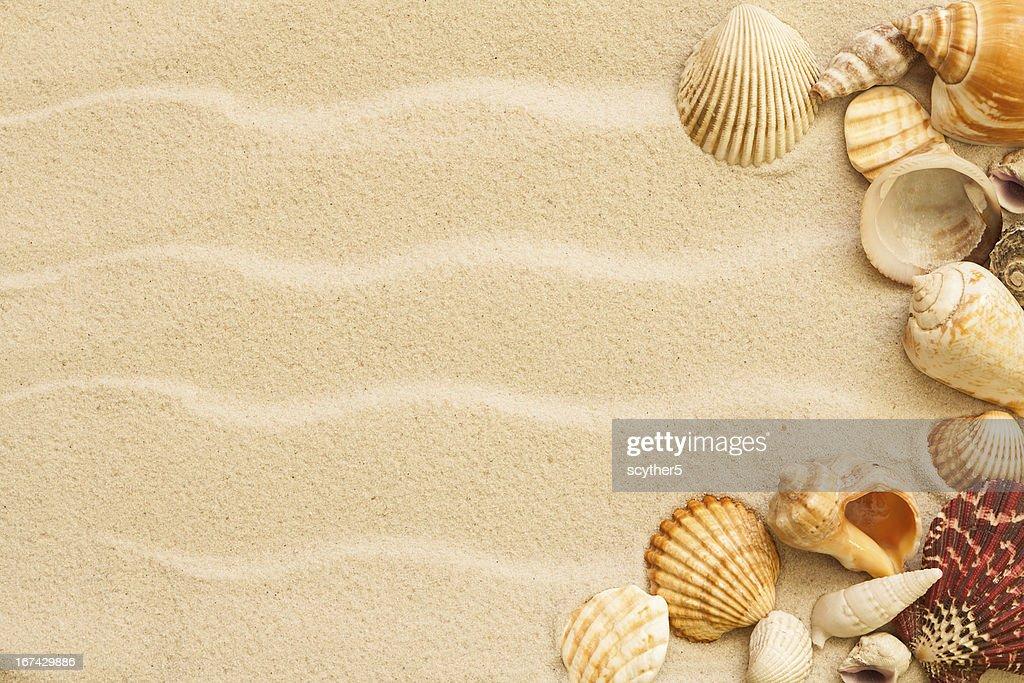 Conchas do mar, com areia como Plano de Fundo : Foto de stock