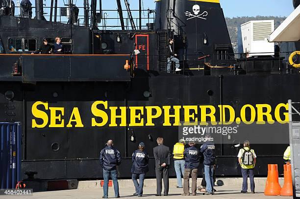 sea shepherd navio m/y steve irwin - pesca de baleia - fotografias e filmes do acervo