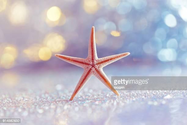 Sea Star by the beach