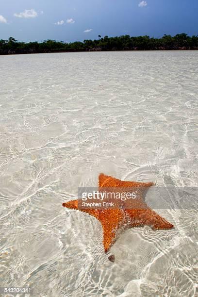 sea star in shallow water. - 浅い ストックフォトと画像