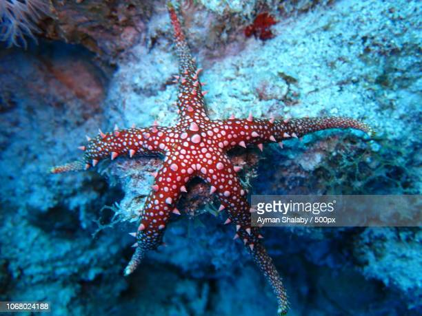 sea star underwater - starfish stock pictures, royalty-free photos & images