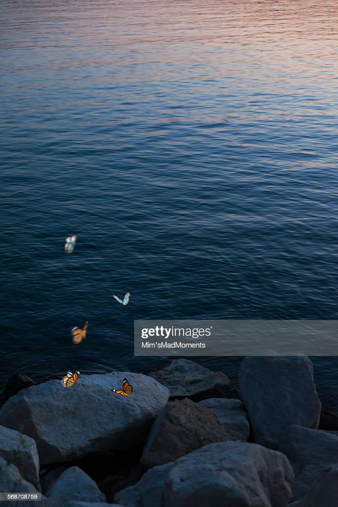 Sea, stones and butterflies : Stock Photo