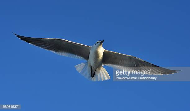 Sea Tern in Florida Beach