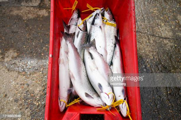 Sea Trout sits on the quayside at the harbour in Scarborough UK on Tuesday June 2 2020 The threat of a nodeal Brexit is back and with it the risk...