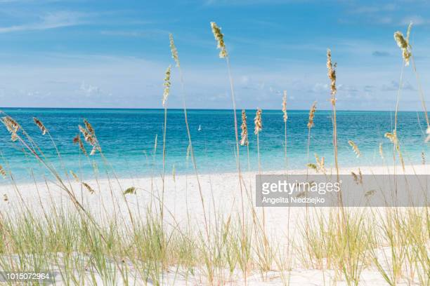 sea, turks and caicos - turks and caicos islands stock pictures, royalty-free photos & images