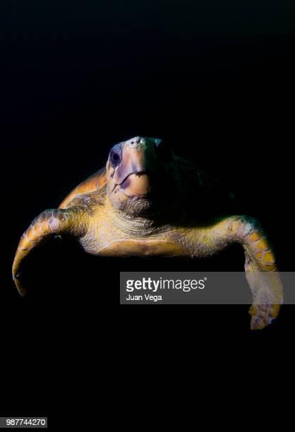 Sea turtle against black background, Mozambique