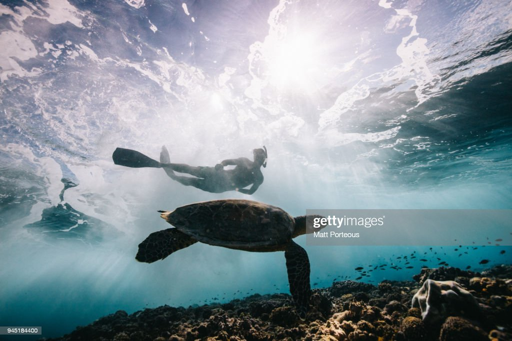 Sea Turtle and Surfer : Stock Photo