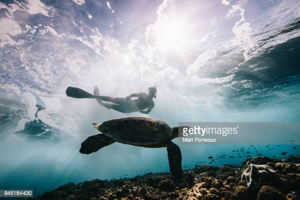 Sea Turtle and Surfer