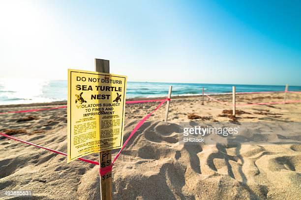 Sea Turtle Nesting on Beach