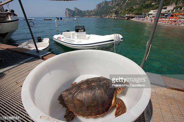 Sea turtle ready to be embarked on a boat that will carry it off shore to be set free, after recovering from injuries in a specialized center.