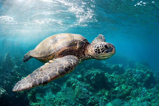 Sea turtle reef