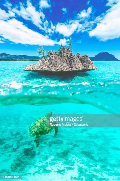 sea turtle swimming to famous crystal rock, indian ocean, mauritius - islas mauricio fotografías e imágenes de stock