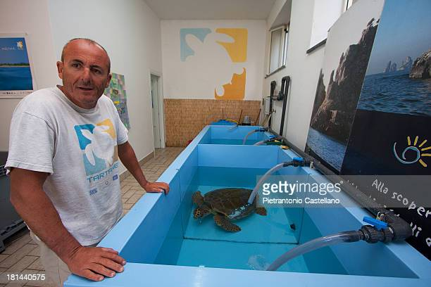 Sea turtle swims in a tank at a recovery center for injured turtles.