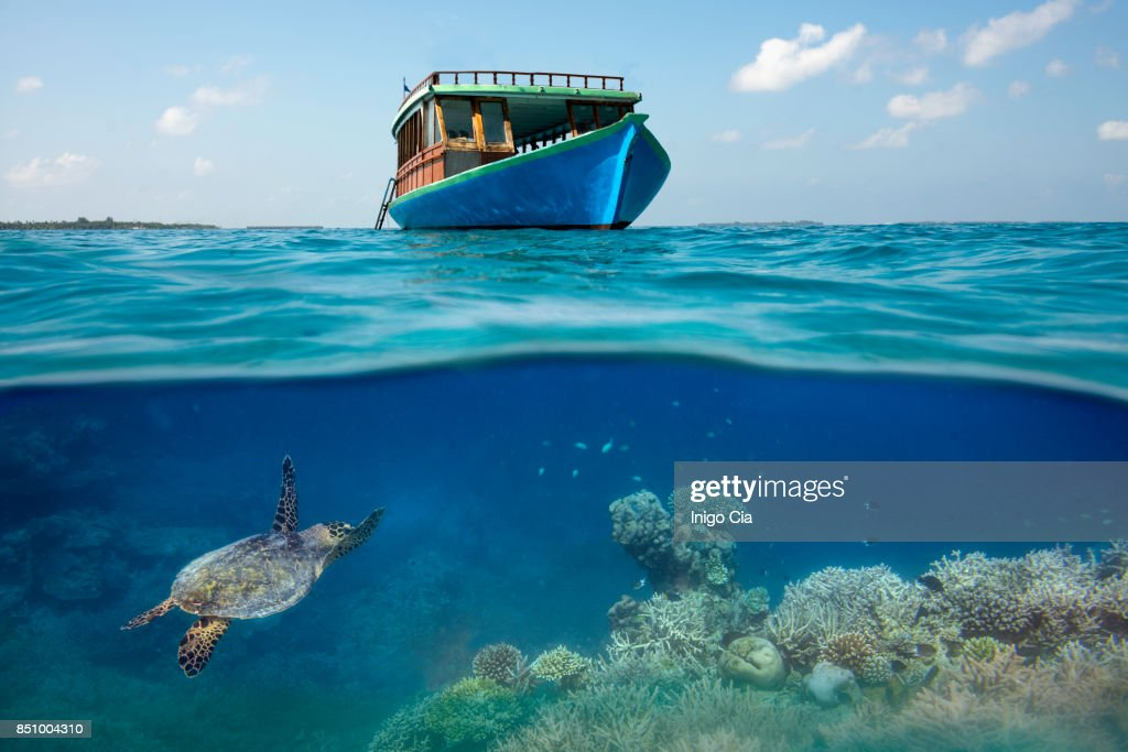 Sea turtle under a boat in a coral reef : Stock-Foto