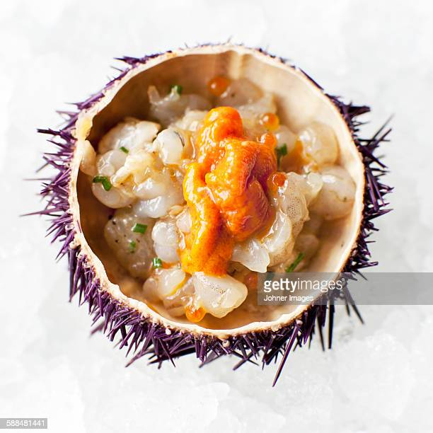 Sea urchin,  close-up