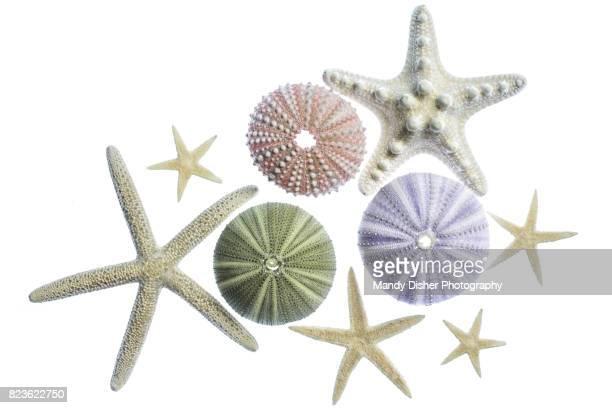 Sea urchins and starfish