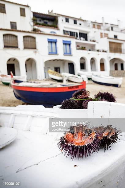 urchins al mar