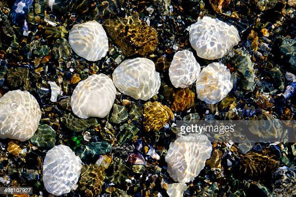 Sea Water over Shells
