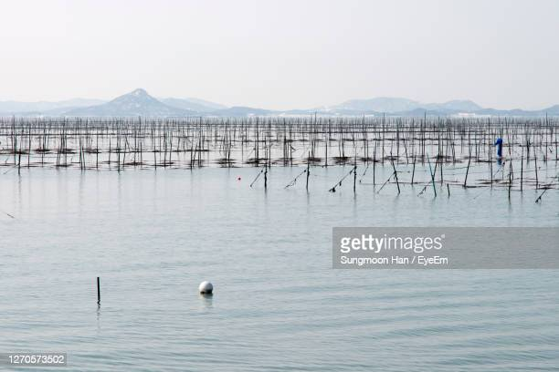 sea weed farm in winter sea against clear sky - gwangju stock pictures, royalty-free photos & images