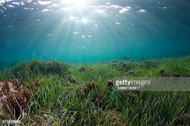 Seabed of seagrass