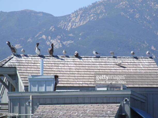 seabird lineup - noreen braman stock pictures, royalty-free photos & images