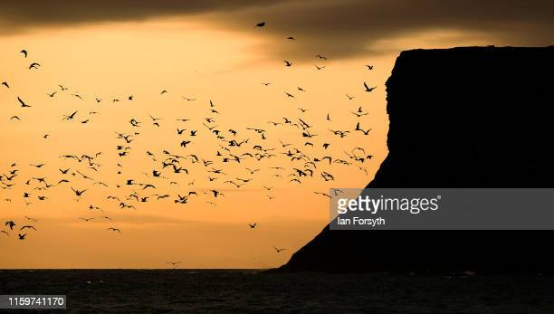 Seabirds fly over the North Sea near Huntcliff sea cliffs at sun rise on July 03 2019 in SaltburnByTheSea England Much of the UK will be dry and...