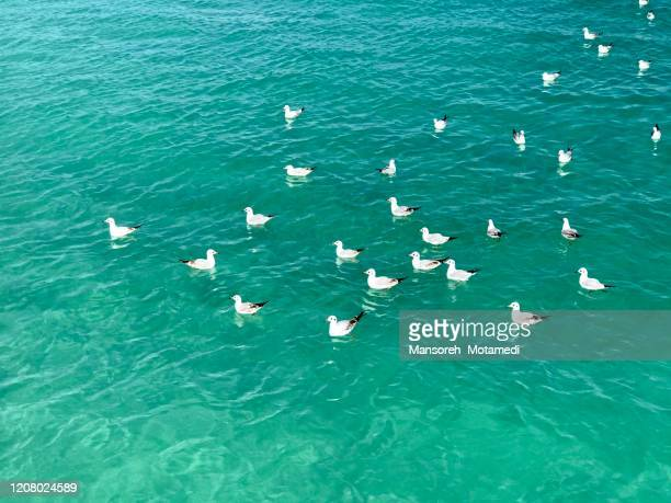 seabirds in persian gulf - gulf countries stock pictures, royalty-free photos & images