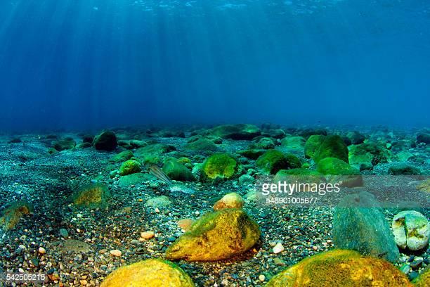 seafloor - fondo marino fotografías e imágenes de stock