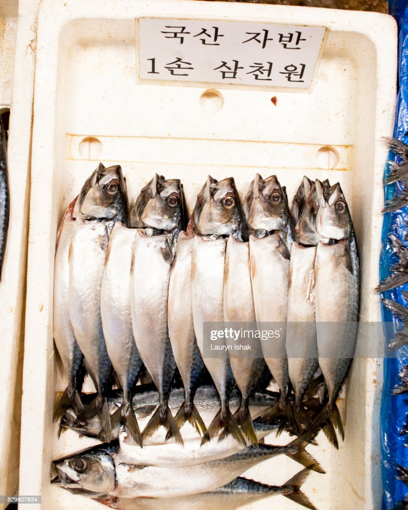Seafood at market : Stock Photo