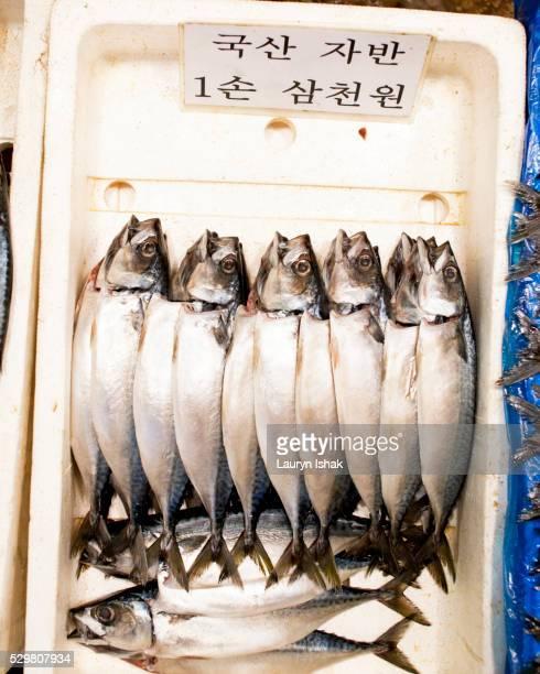 Seafood at market