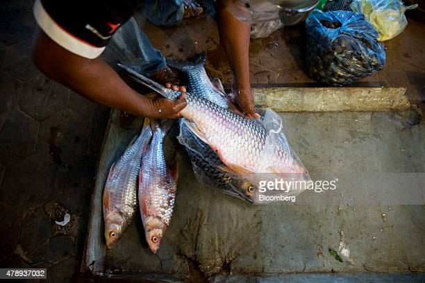 Seafood caught at Tonle Sap lake is placed into bags at Psah Chah market also known as Old Market in Siem Reap Cambodia on Saturday June 27 2015...