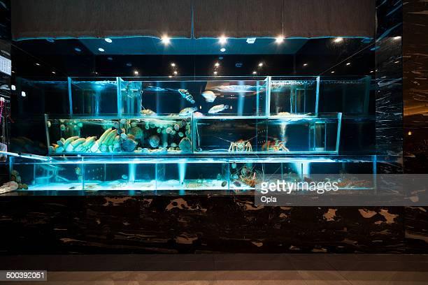 meeresfrüchte auf display - aquarium haustierbedarf stock-fotos und bilder
