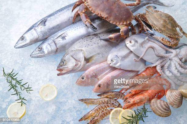 seafood - perch fish stock pictures, royalty-free photos & images