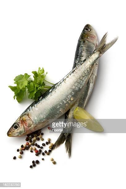 Pescados y mariscos: Sardinas