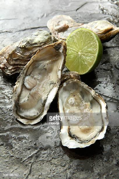 SeafoodStills: Austern