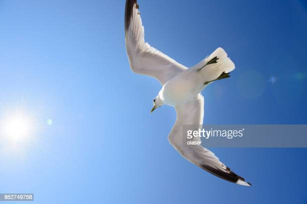 Seagull against blue sky, free as a bird