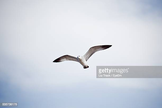 Seagull Against Sky