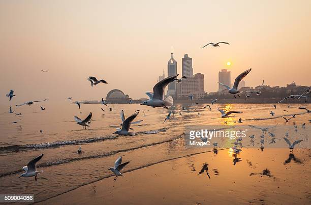 Seagull and Qingdao Sunset Scenery