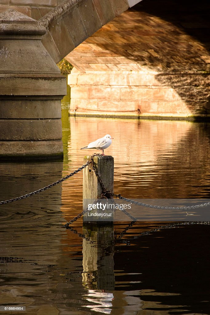 seagull and the arch : Stock Photo
