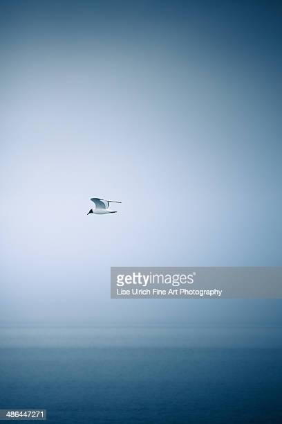 seagull and the blue sea - lise ulrich stock pictures, royalty-free photos & images