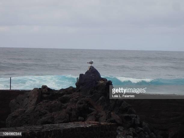 A seagull and the sea