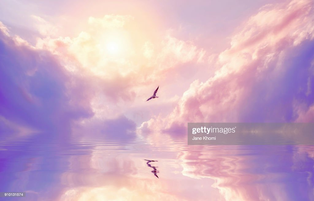 Seagull and violet clouds : Stock Photo