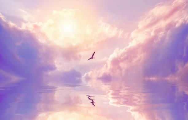 Seagull Violet Clouds - Fine Art prints