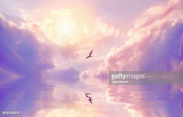seagull and violet clouds - dreamlike stock pictures, royalty-free photos & images