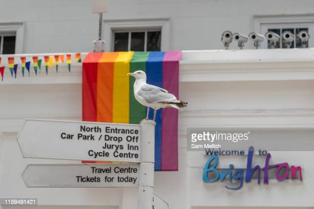 A seagull at Brighton train station with a rainbow flag in the background on the 3rd August 2019 in Brighton in the United Kingdom